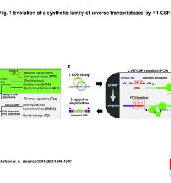 1 evolution of a synthetic family of reverse transcriptases by rt csr  [ 1024 x 768 Pixel ]
