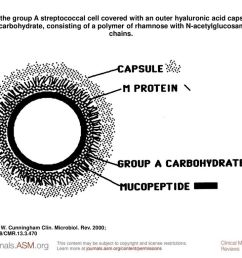 diagram of the group a streptococcal cell covered with an outer hyaluronic acid capsule and the [ 1024 x 768 Pixel ]