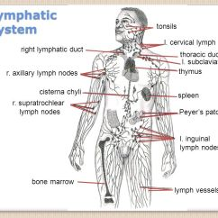 Diagram Nodes Lymphatic System Control 4 Wiring Tonsils L. Cervical Lymph Right Duct - Ppt Video Online Download