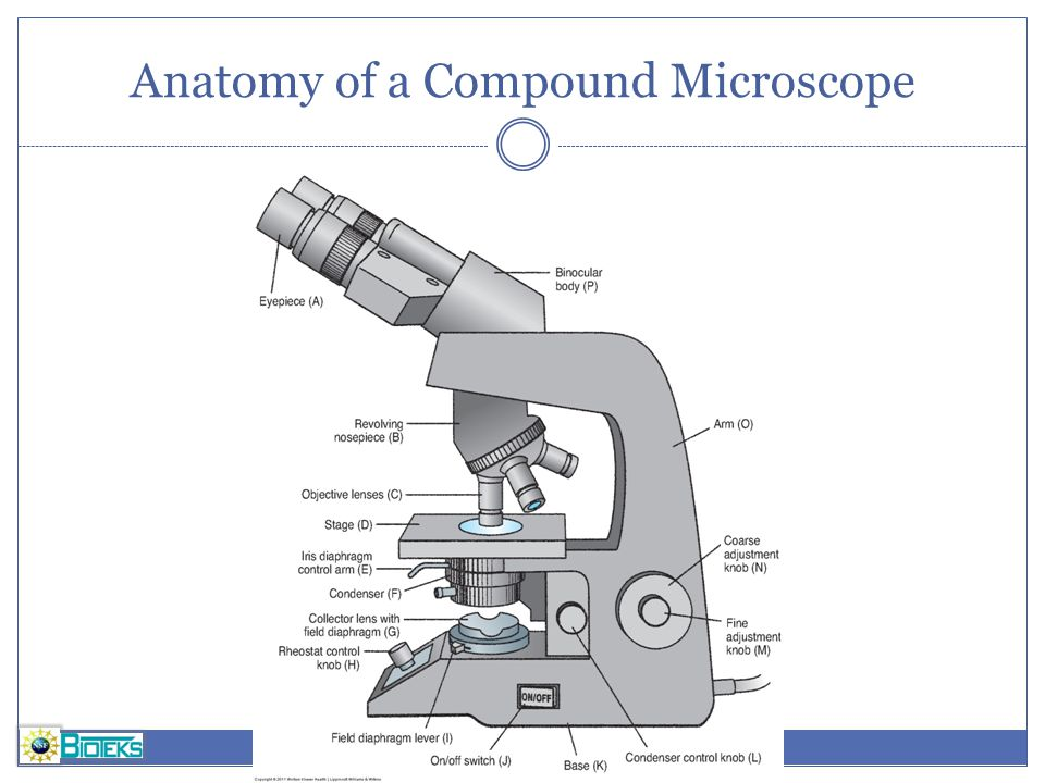 binocular compound microscope diagram kfi winch solenoid wiring microscopy do you want a footer ppt video online download 14 anatomy
