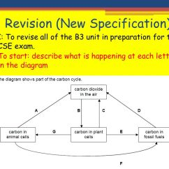 The Carbon Cycle Diagram Gcse 4 Light Ballast Wiring B3 Revision New Specification Ppt Video Online Download