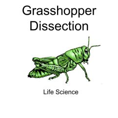 Grasshopper Insect Diagram 3157 Bulb Socket Wiring Dissection Ppt Video Online Download
