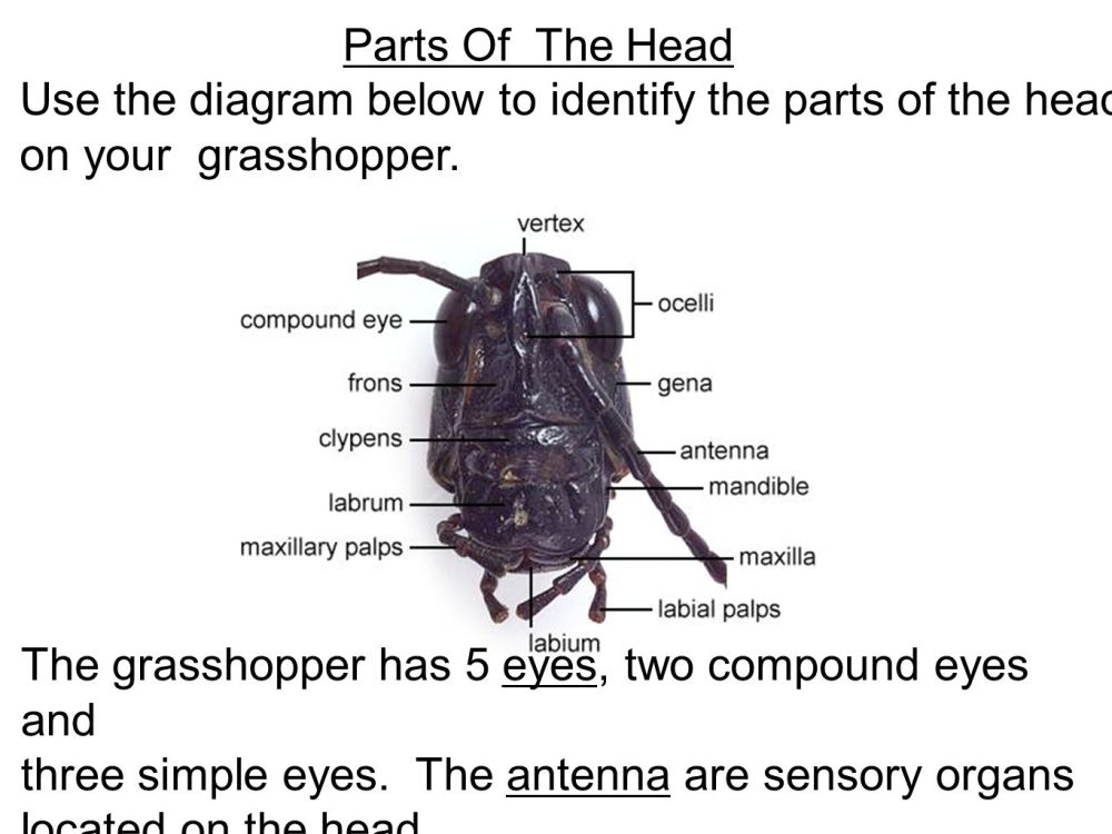 medium resolution of parts of the head use the diagram below to identify the parts of the head