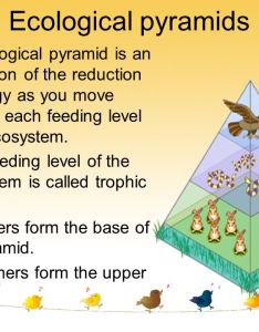 ecological pyramids also ecosystem ppt download rh slideplayer