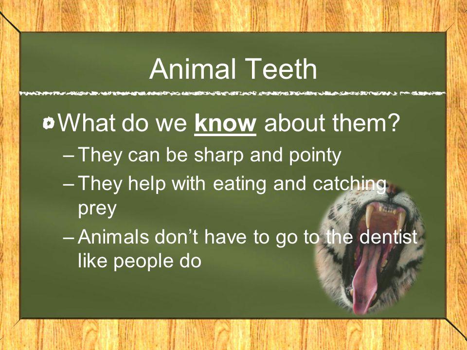 Image of: Fish Animal Slideplayer Human Teeth Vs Animal Teeth Ppt Video Online Download