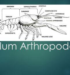 arthropoda diagram [ 1280 x 720 Pixel ]