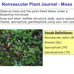 Elodea Leaf Cell Diagram Plug Wiring Australia Label Of Cells Diagrams Control Structure