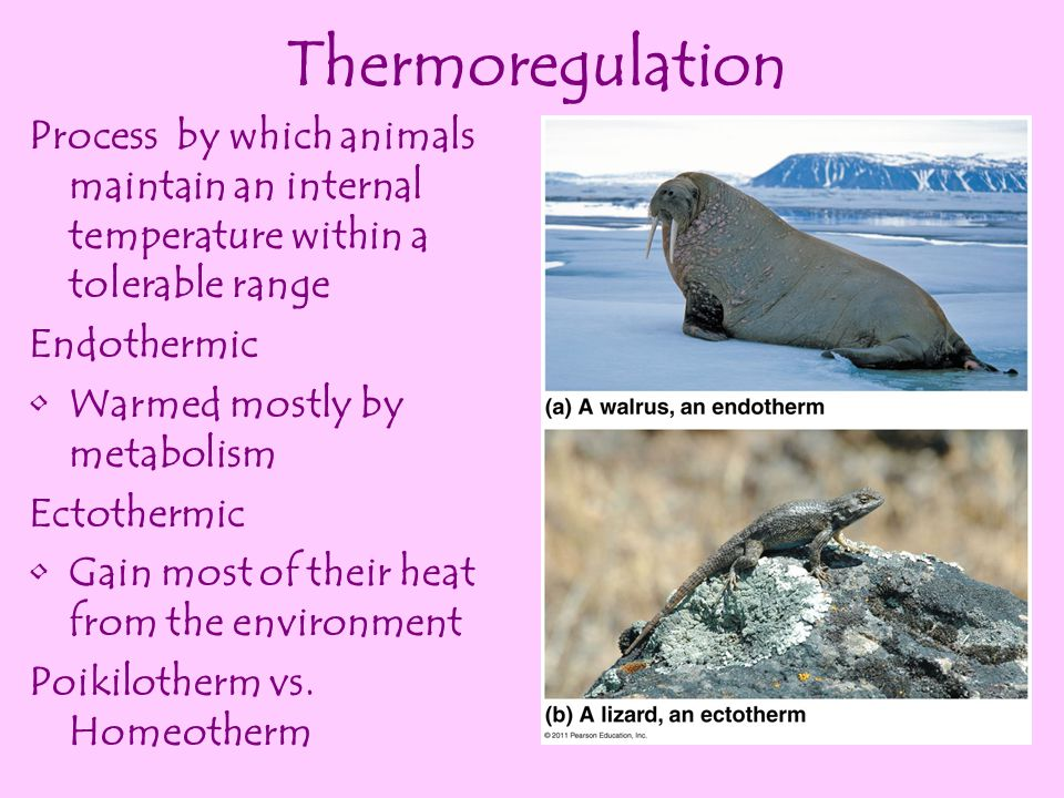 Basic Principles Of Animal Form And Function Ppt Video