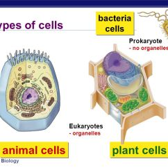 Animal Vs Plant Cell Diagram Basic Home Wiring Diagrams Pdf Cells & Organelles - Ppt Video Online Download