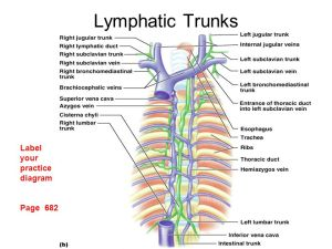 Chap 19 – Lymphatic System  ppt video online download