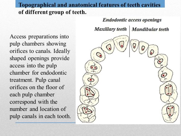Endodontics Definition ppt video online download