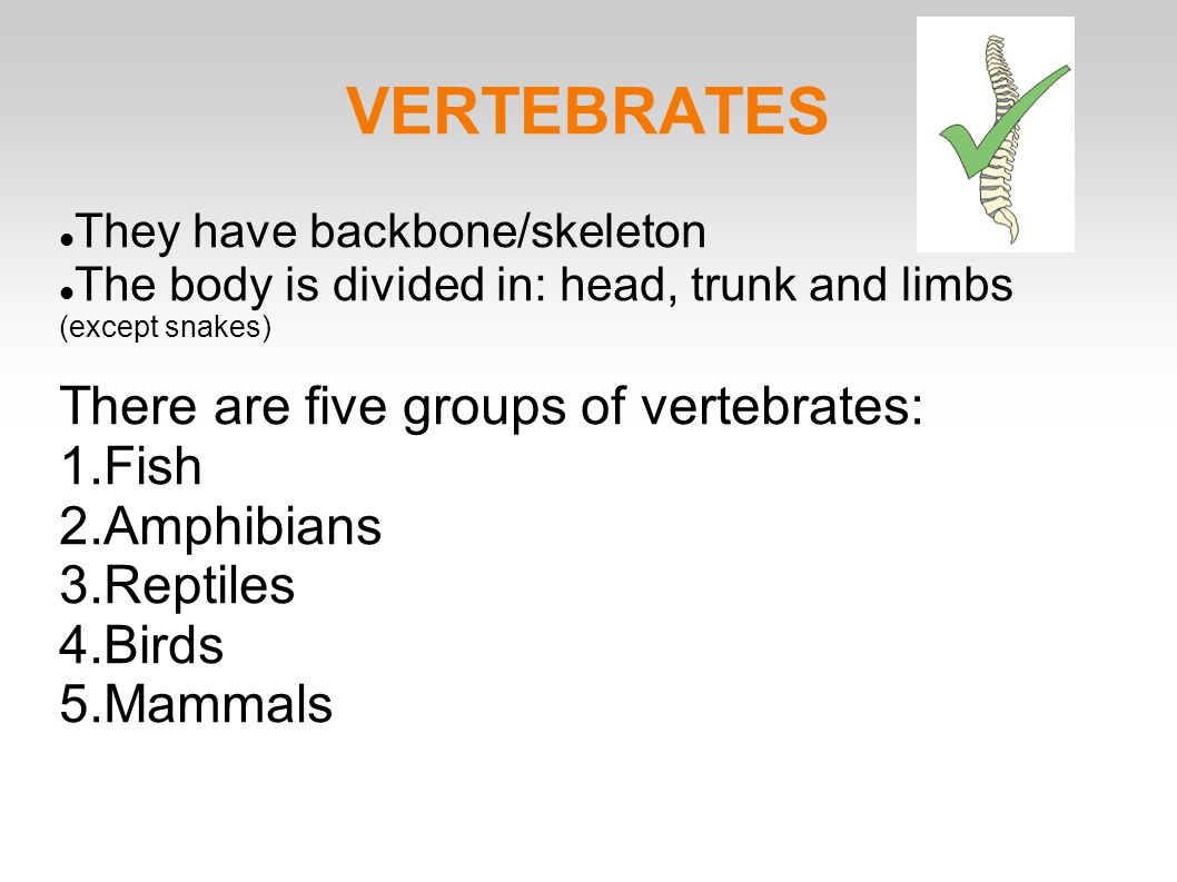 Five Classes Of Vertebrates