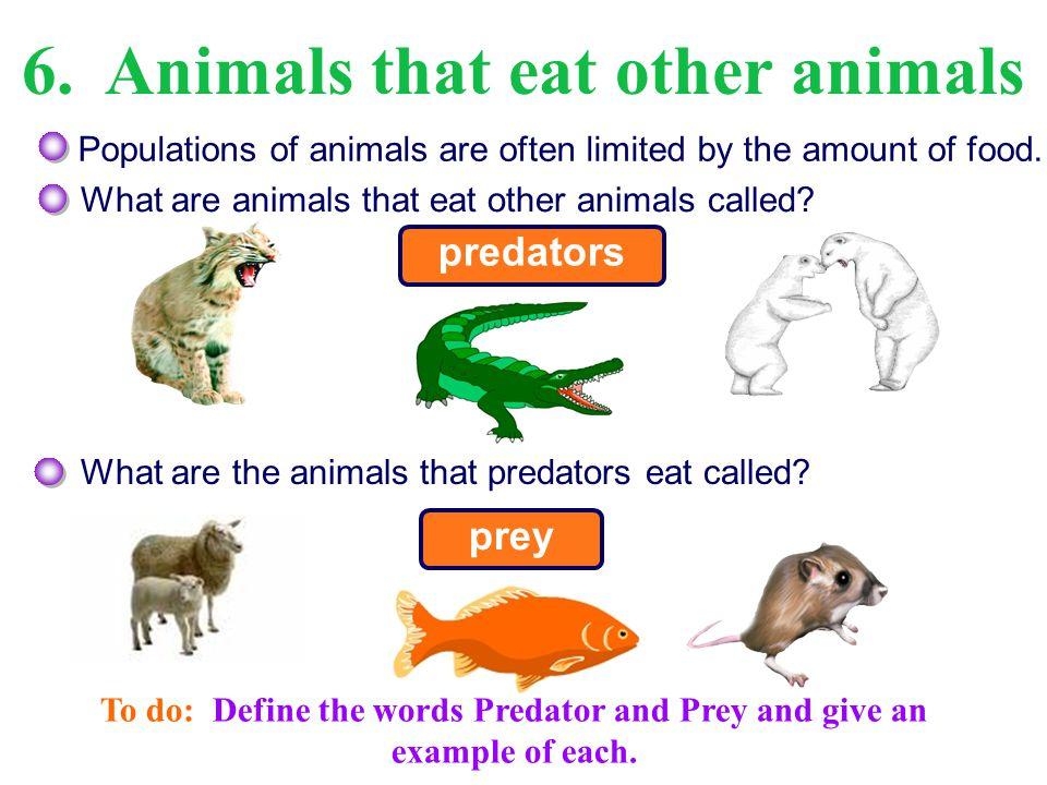1 Predator Prey Relationships Ppt Video Online Download