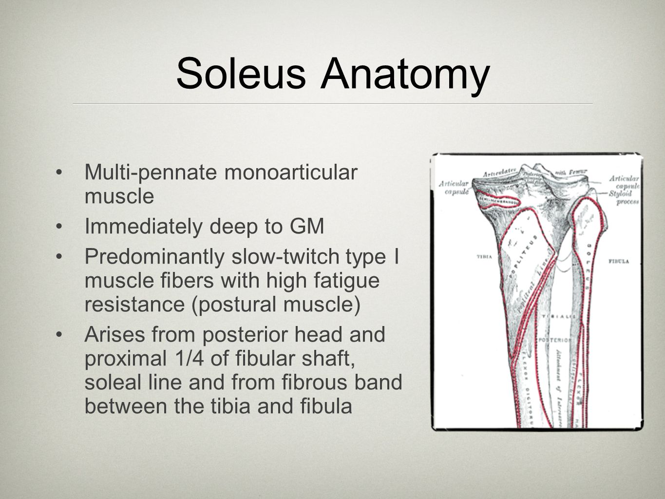 hight resolution of 6 soleus