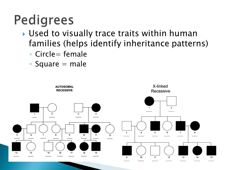 Mendel and Genetics Chapter ppt video online download