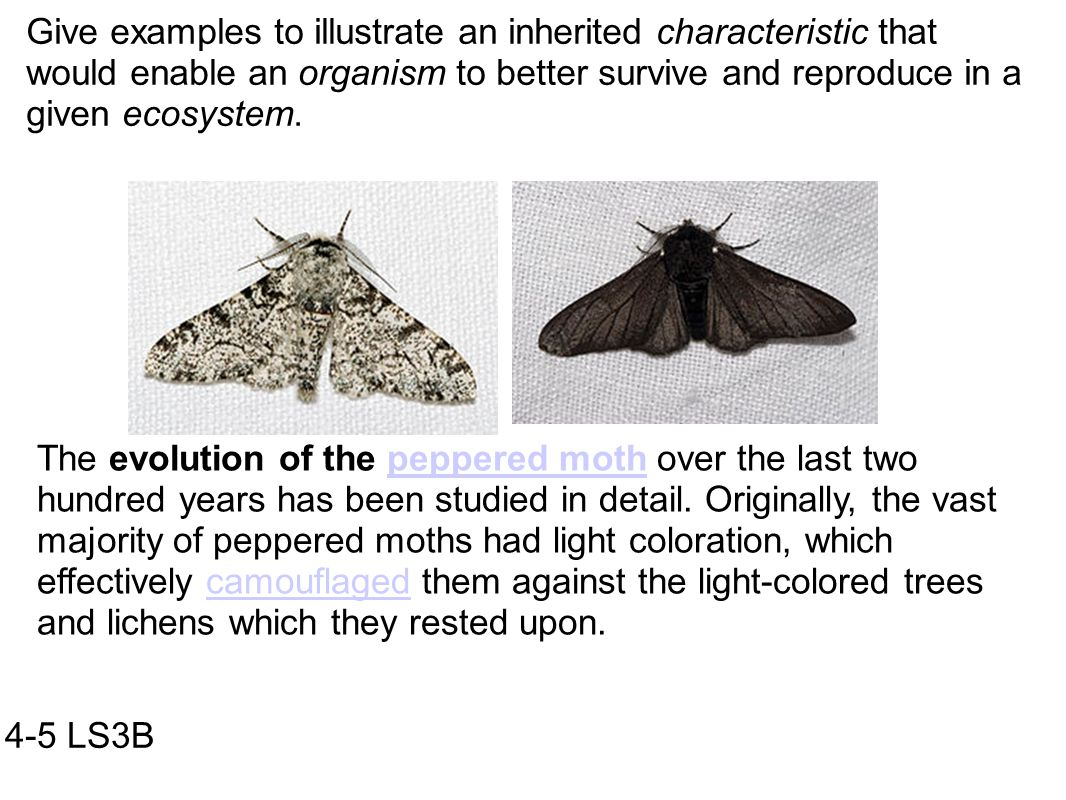 Peppered Moth Evolution Worksheet Printable Worksheets