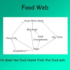 Great White Shark Food Chain Diagram Ford Ranger Wiring 2007 Chains Show Which Organisms Eat Other 5 Web 1 Write Down Two From This