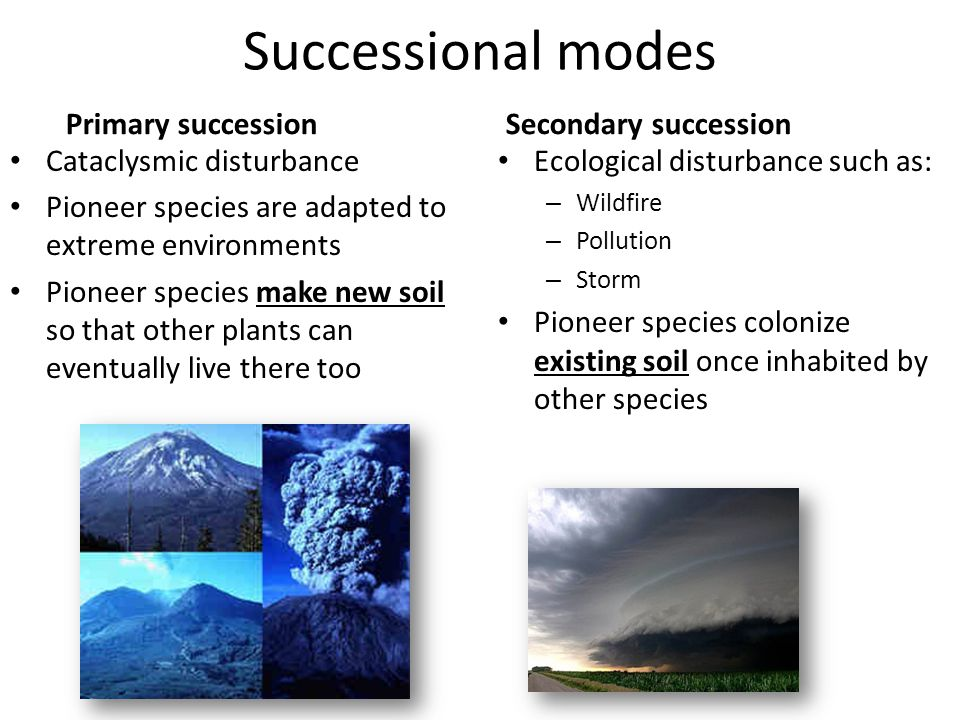 Ecological Succession Ppt Video Online Download