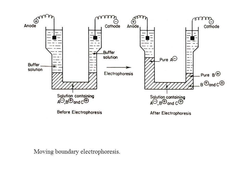 electrophoresis diagram electrophoresis diagram