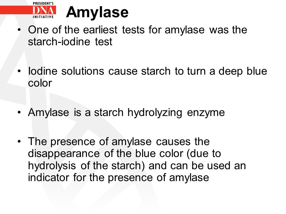 Breakdown Starch Presence Amylase Maltose