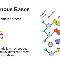 3 nitrogenous  [ 1280 x 720 Pixel ]