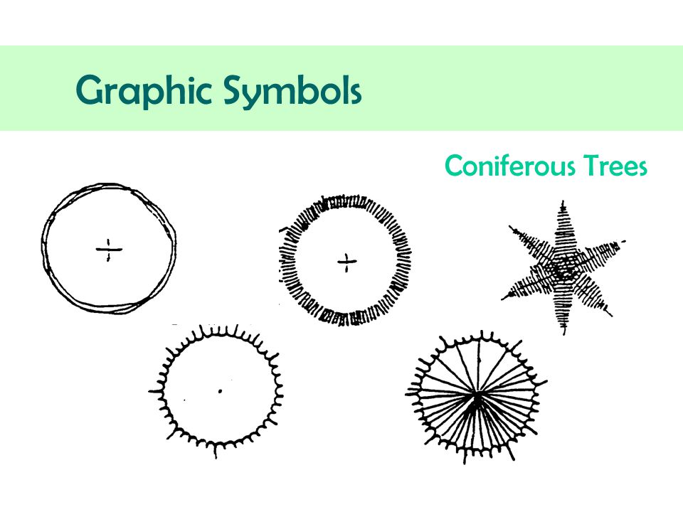 shrub graphic symbols diagram globe theatre landscape design details ppt download 4 coniferous trees