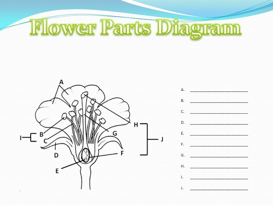 flower parts diagram vintage surgical ppt video online download
