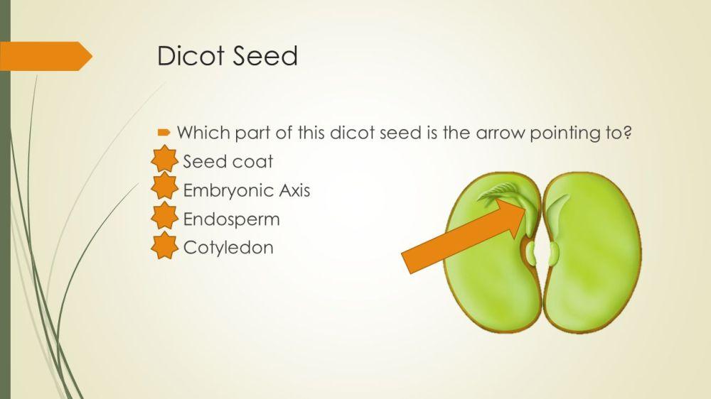 medium resolution of 52 dicot seed