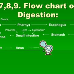 Flow Diagram Of Digestive System Lutron 4 Way Dimmer Wiring The Ppt Download Chart Digestion