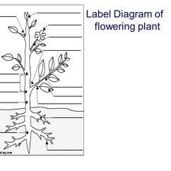 Flower Parts Diagram Without Labels Wiring For Kohler Cv15s Structure Of Flowering Plants Ppt Video Online Download 8 Label