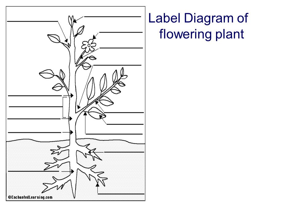 flower parts diagram without labels electricity board wiring structure of flowering plants ppt video online download 8 label