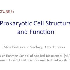 Microbiology Prokaryotic Cell Diagram Labeled 06 Ford Fusion Fuse Structure And Function Ppt Video Online Download