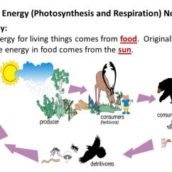Photosynthesis And Cellular Respiration Cycle Diagram Fender S1 Wiring Cell Energy 1 17 Kenmo Lp De Diagrams Clicks Rh 39 Canasta Im Bayrischen Wald Chloroplast Plant