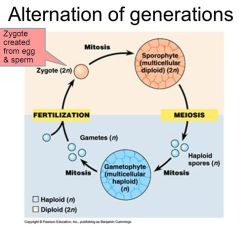 Life Cycle Of A Labeled Moss Diagram Jerusalem Temple Ppt Video Online Download 3 Alternation Generations