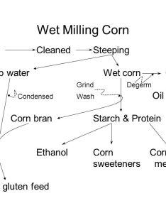 Wet milling corn cleaned steeping steep water germ also rh slideplayer