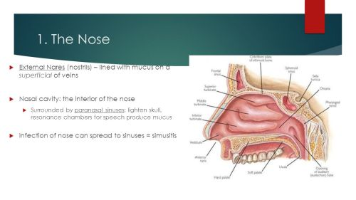 small resolution of the nose external nares nostrils lined with mucus on a superficial