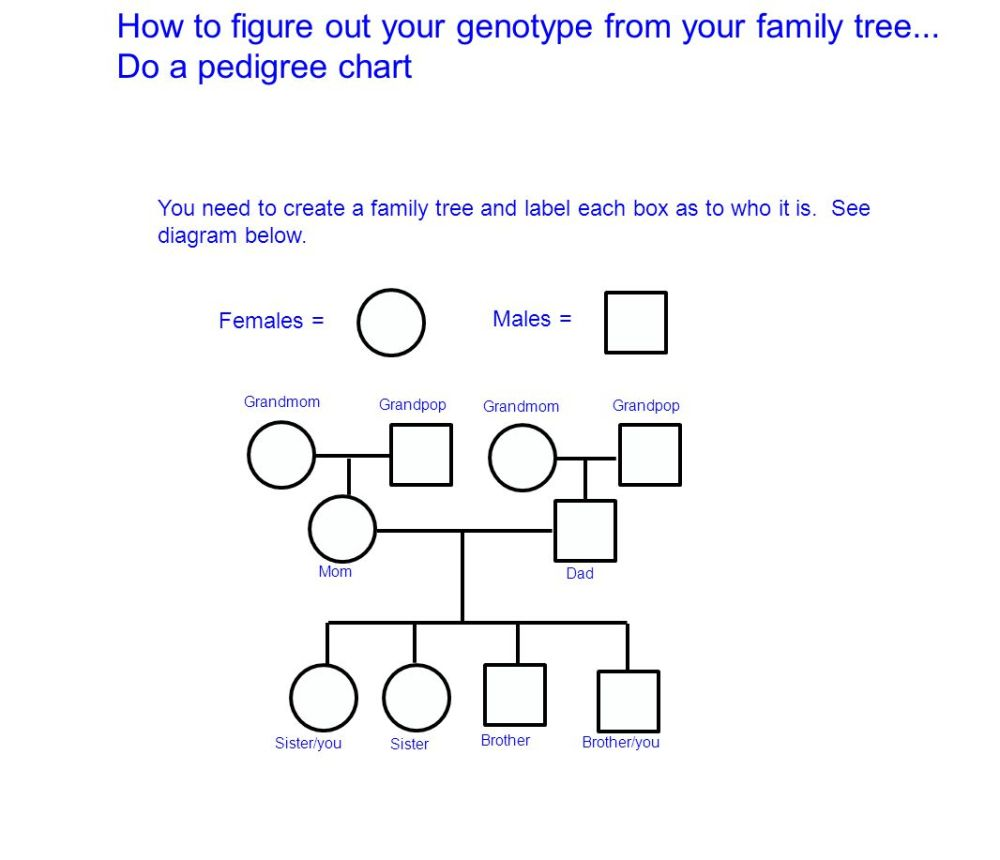 medium resolution of how to figure out your genotype from your family tree
