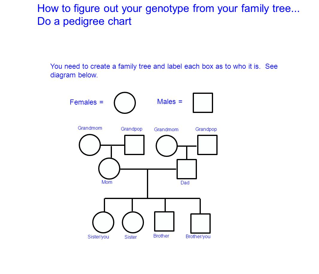 hight resolution of how to figure out your genotype from your family tree