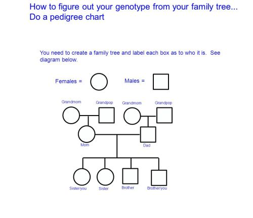 small resolution of how to figure out your genotype from your family tree
