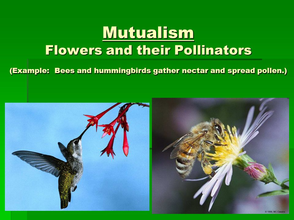 Symbiotic Relationships Ppt Video Online Download