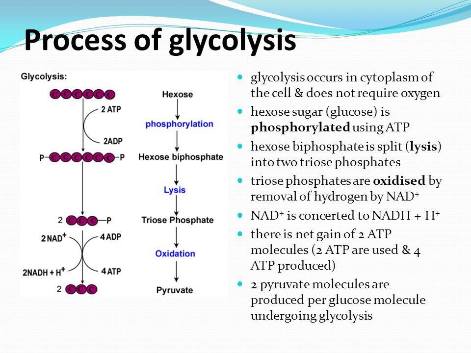 diagram of the atp molecule rv converter wiring cellular respiration pp 69 – 73 & ppt video online download
