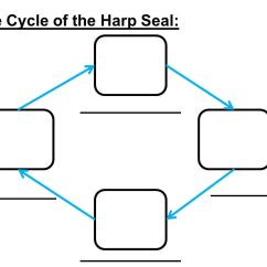 Harp Seal Life Cycle Diagram Jcb Alternator Wiring Researched By Ppt Download 91 Of The