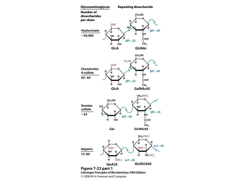Lehninger Principles Of Biochemistry Solutions Pdf