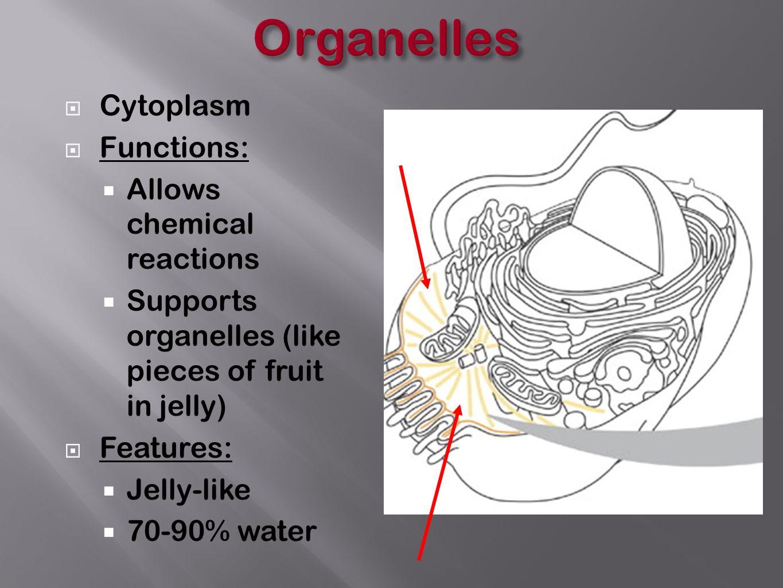 hight resolution of 5 organelles cytoplasm