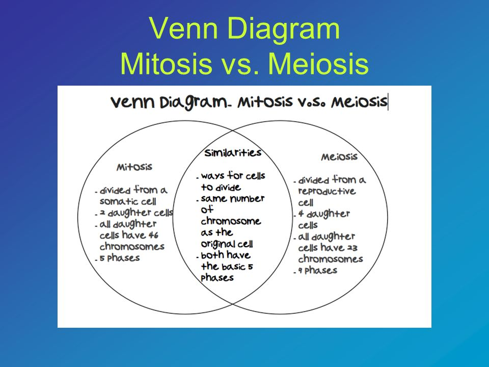 mitosis and meiosis venn diagram answers dual immersion switch wiring warm up monday november 26 ppt download 87 vs