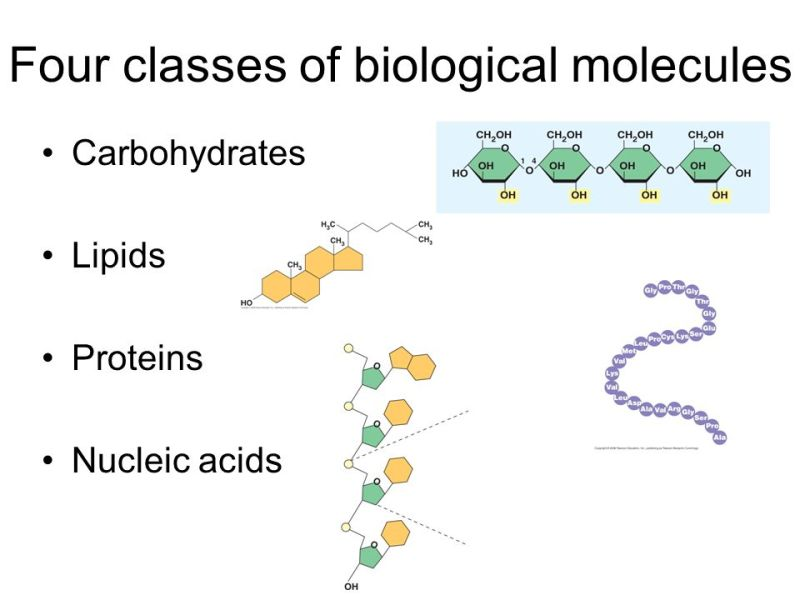 What Is The Molecular Structure Of Carbohydrates Lipids And Proteins