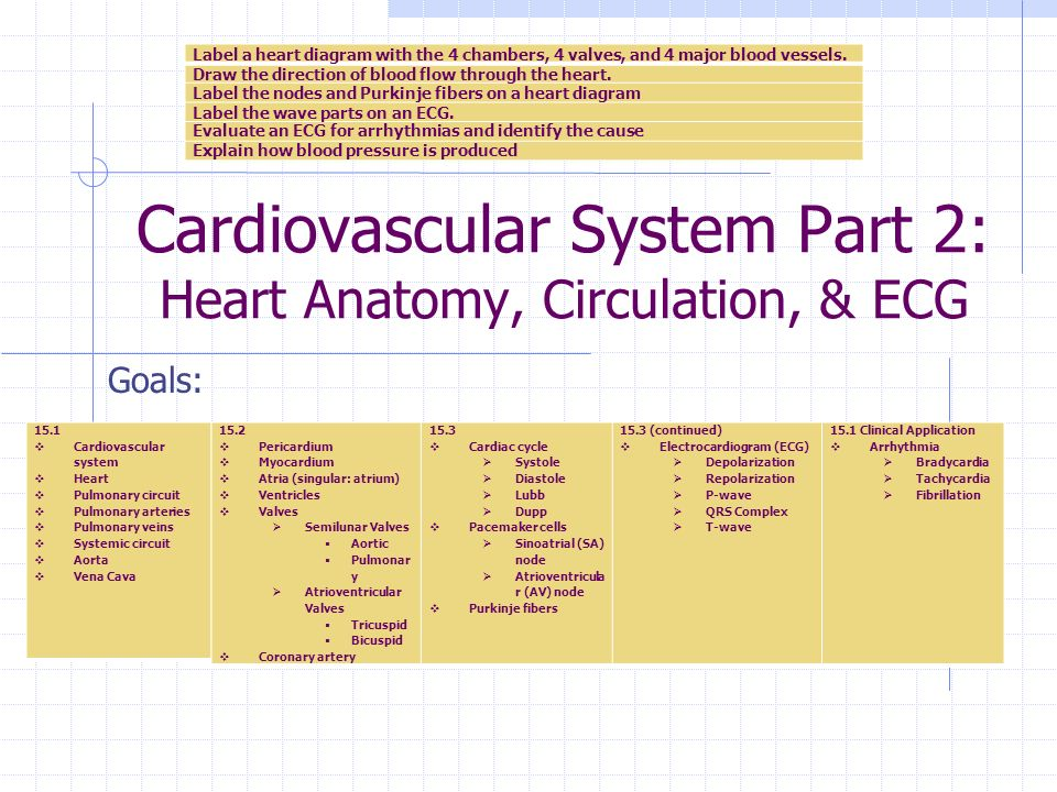 cardiac arteries diagram dragonfire active pickups wiring cardiovascular system part 2: heart anatomy, circulation, & ecg - ppt video online download