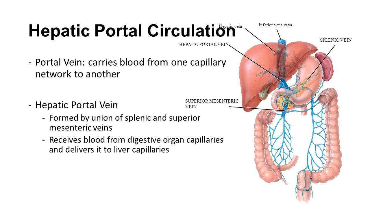 98 Hepatic Portal Vein An Overview Sciencedirect Topics What