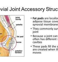 synovial joint accessory structures [ 1280 x 720 Pixel ]