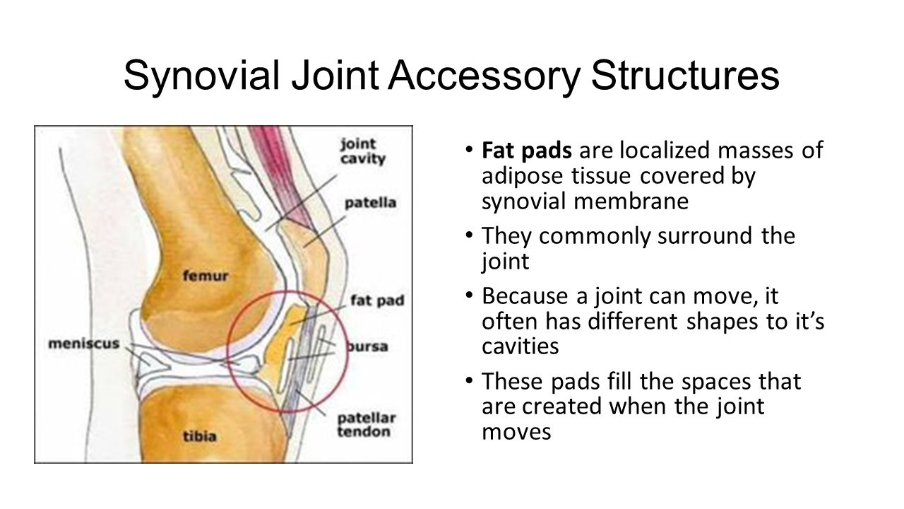 hight resolution of synovial joint accessory structures